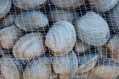 Littleneck Clams (Ameghinomya antiqua) packed in mesh sacks on a jetty at the fishing port of Quellon on the island of Chiloe in Chile