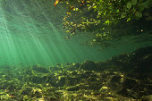 Freshwater underwater photography from the littoral zone.