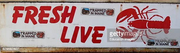 Live lobster for sale sign Vinalhaven Island Maine New England USA