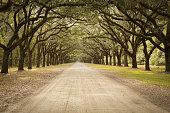 Live Oak Avenue In Georgia, USA