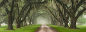 This driveway, located outside of Charleston SC, is considered by many to be the most beautiful plantation driveway on the Eastern Seaboard. On this morning, the fog had rolled into the Lowcountry and