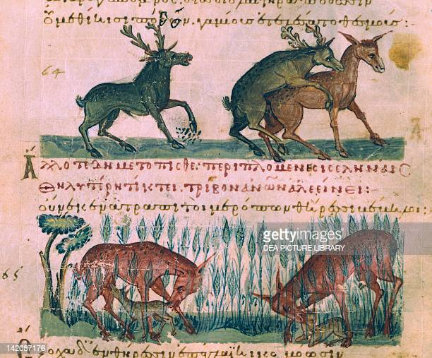 Lives of Deer from a Greek treatise on hunting and fishing manuscript 11th Century