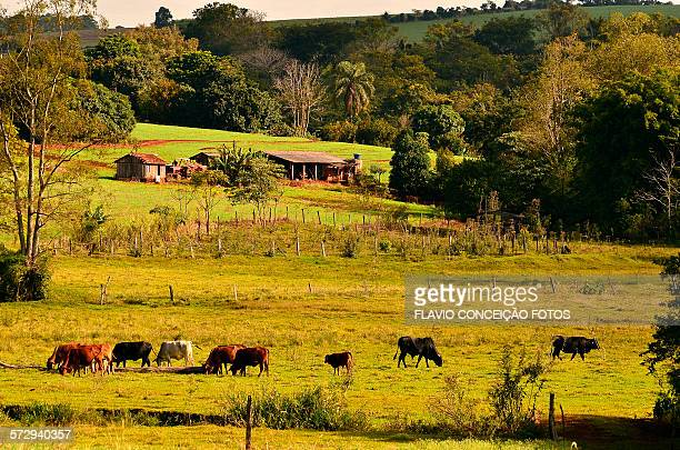 Livestock and agriculture Brazil