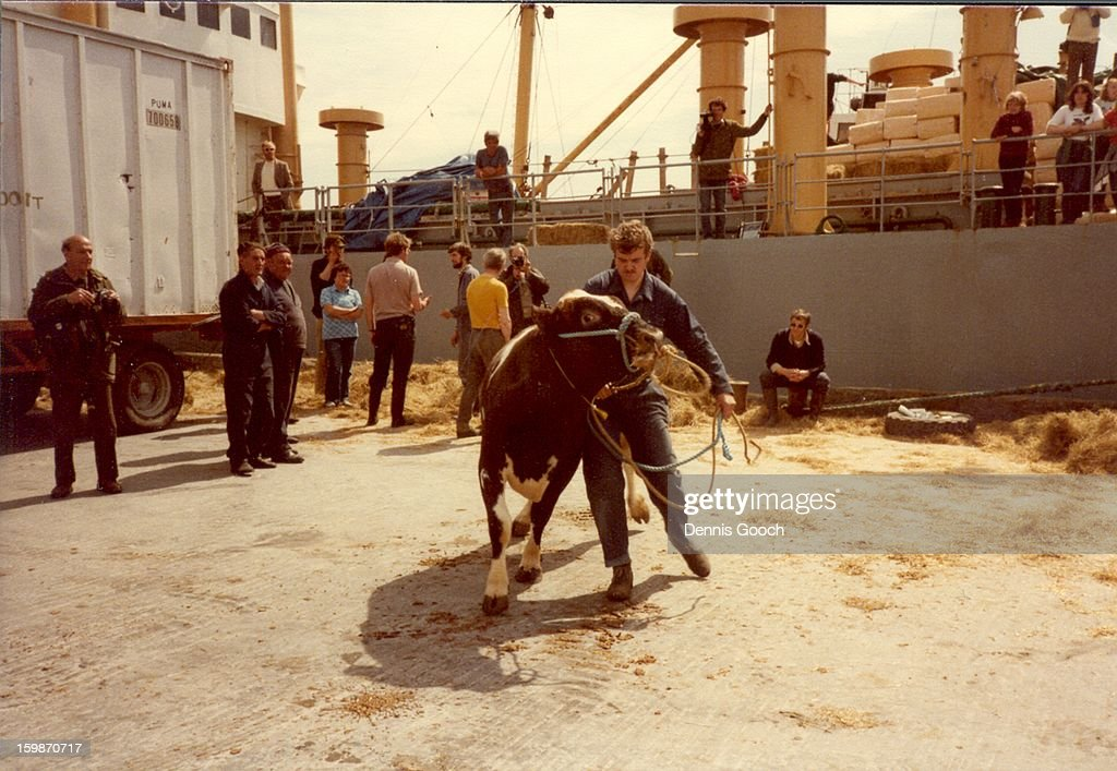 CONTENT] Livestock being unloaded from Dina Khalaf after 36 day journey from England. October 1983