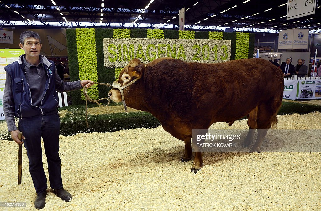 A livestock farmer presents a genetically selected hornless bull at the Paris International Agri-business Show (SIMA), which is part of the yearly International Agriculture Fair of Paris, on February 24, 2013, in Villepinte, a Paris suburb. The events runs from February 23 to March 3, 2013. AFP PHOTO / PATRICK KOVARIK