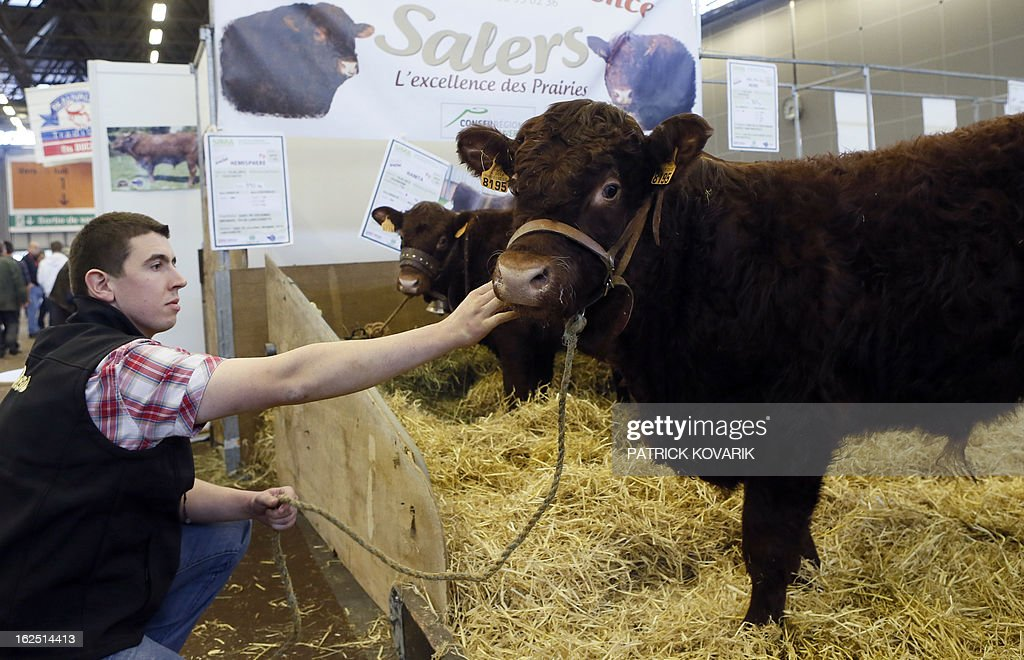 A livestock farmer strokes a genetically selected hornless Salers breed bull at the Paris International Agri-business Show (SIMA), which is part of the yearly International Agriculture Fair of Paris, on February 24, 2013, in Villepinte, a Paris suburb. The events runs from February 23 to March 3, 2013.