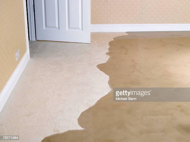 Living room carpet flooding