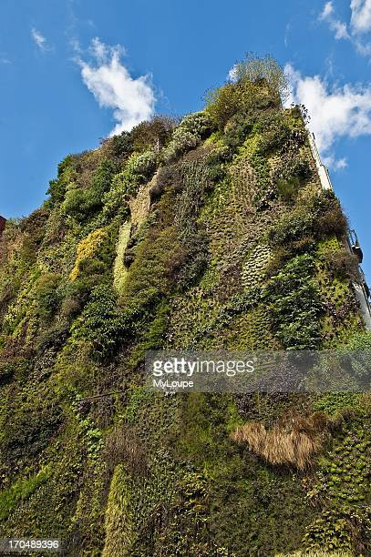 Living wall at the Caixa Forum Madrid Spain