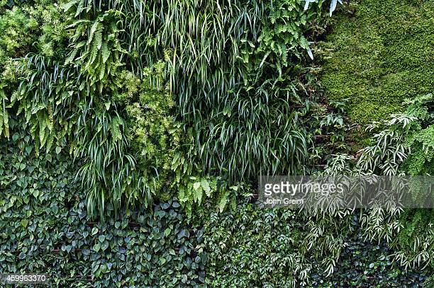 Living wall or vertical garden