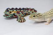 Lizard and a lizard-shaped sculpture