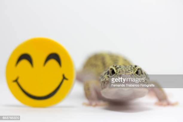 Lizard and smiling human face