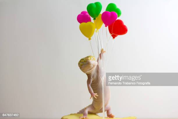 Lizard holding colorful helium balloons and flying through the air