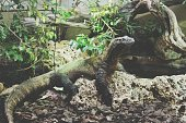 Lizard On Rock In Terrarium