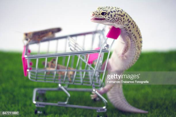 Lizard pushes shopping cart with insects (grasshopper)