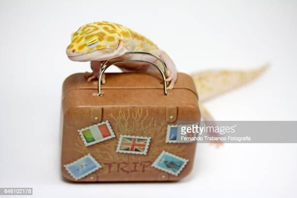 Lizard pushing a travel suitcase