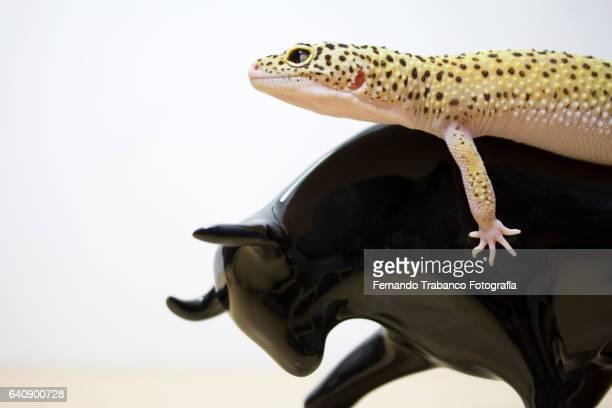 Lizard riding a porcelain bull