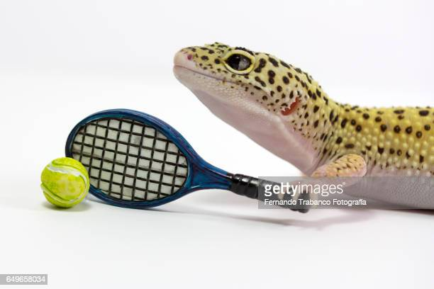 Lizard strikes the ball with a racket of tennis in tennis court