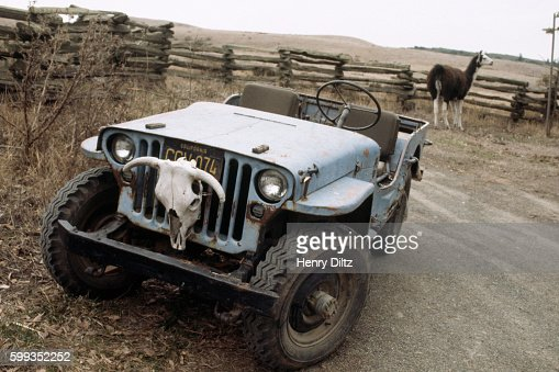 Ranch Jeep >> Llama And Jeep On Ranch Stock Photo Getty Images