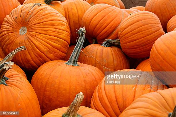 Load of Pumpkins