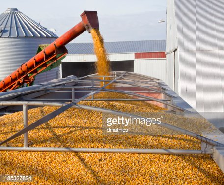 Loading corn from bins into trailer