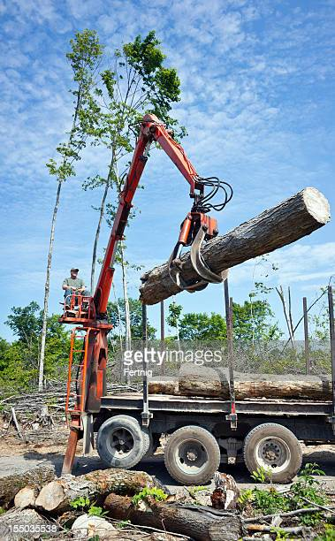 Loading cut logs at a loggging operation.
