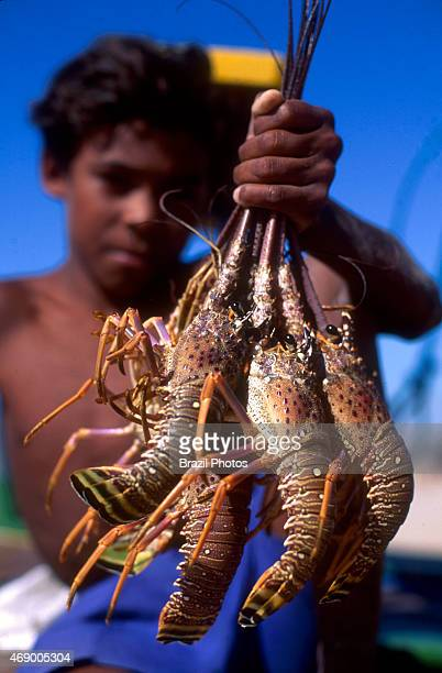 Lobster fishing darkskinned boy holds a bunch of lobsters for sale at the beach Ceara State shore near Fortaleza Brazil