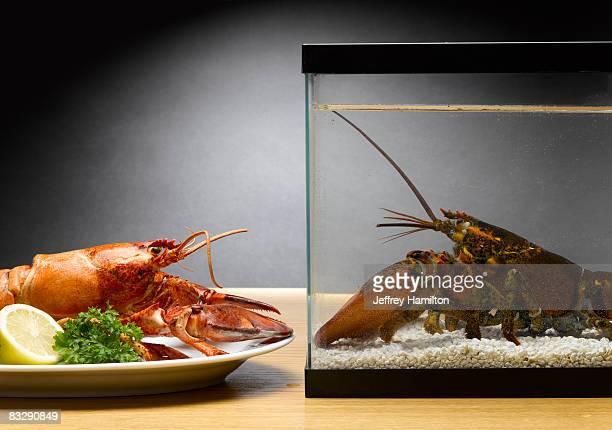 Lobster in aquarium looking at cooked lobster