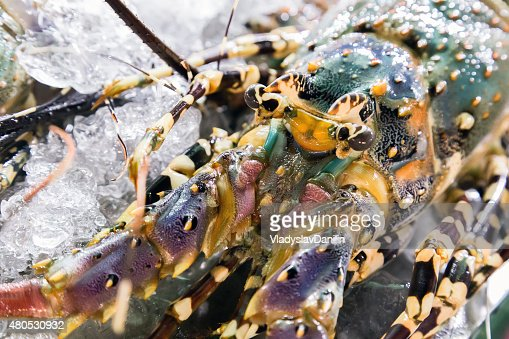 lobster in Barbecue Grill cooking seafood. : Stock Photo