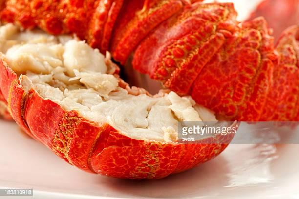 Lobster macro