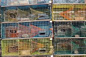 Lobster traps on dock Vinalhaven Island Maine New England USA