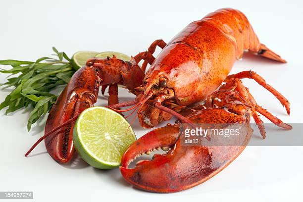 A lobster with lemon on a white background