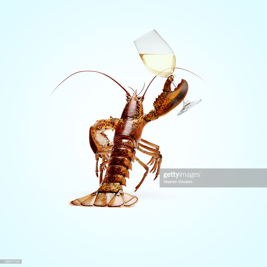 lobstermayhem cheers : Stock Photo