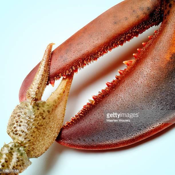 lobstermayhem claw 02