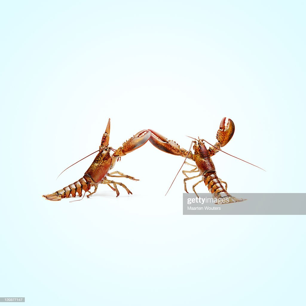 lobstermayhem dance 02 : Stock Photo