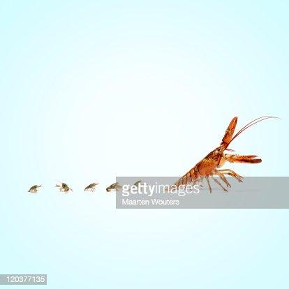 lobstermayhem follow the leader : Stock Photo