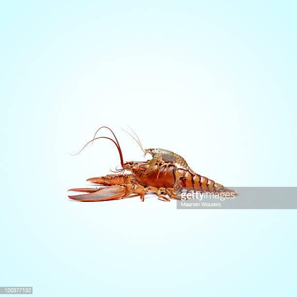 lobstermayhem friends 01