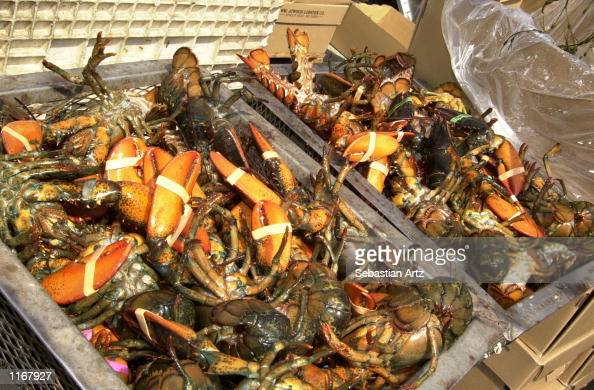 Lobsters sit in metal trays before being cooked at the Port Of Los Angeles Lobster Festival October 05 2001 in San Pedro CA
