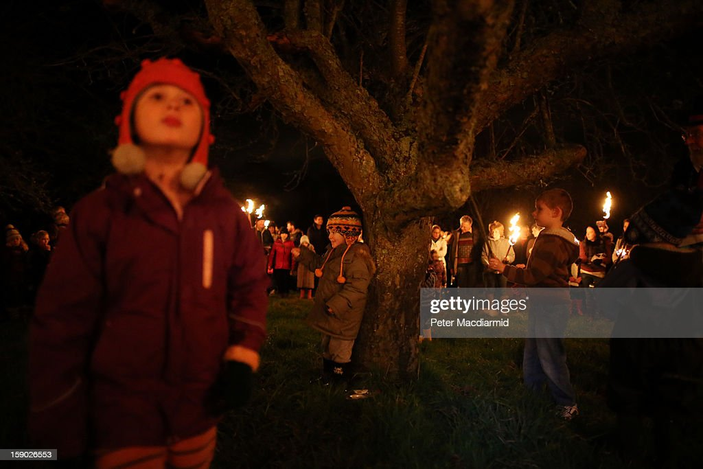 Local children thrash the largest and oldest tree to stimulate it's growth during the Apple Howling ceremony at Old Mill Farm on January 5, 2013 in Bolney, England. In this ancient ritual evil spirits are driven out and good spirits are encouraged to produce a bountiful apple crop for the following year's cider drink.