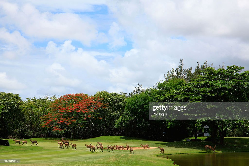 Local deer roam across the 3rd green during the second round of the MCB Tour Championship played at the Legend Course, Constance Belle Mare Plage on December 13, 2014 in Poste de Flacq, Mauritius.