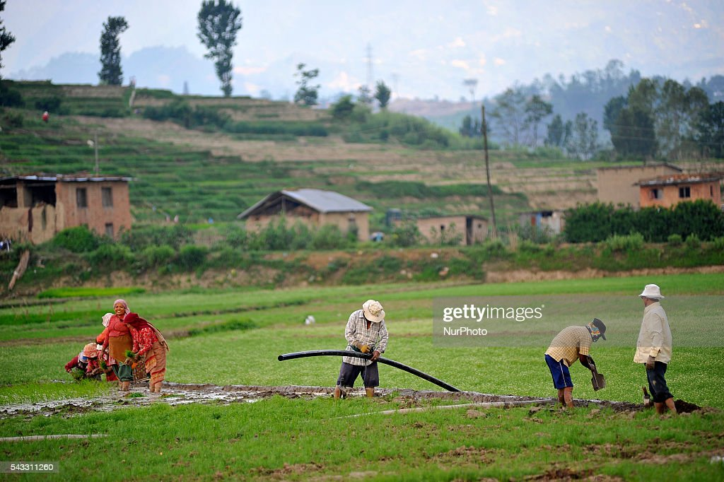 Local farmer's arranging pipeline for water, which was pumped from Bagmati river for Plants Rice Saplings at Khokana, Patan, Nepal on June 27, 2016. Due to the less rainfall on monsoon season, Most of the people of Khokana Plants Rice by pumping water from nearer Bagmati River, which cost additional of NRs 500 (US$ 5) per hour for pump charge.