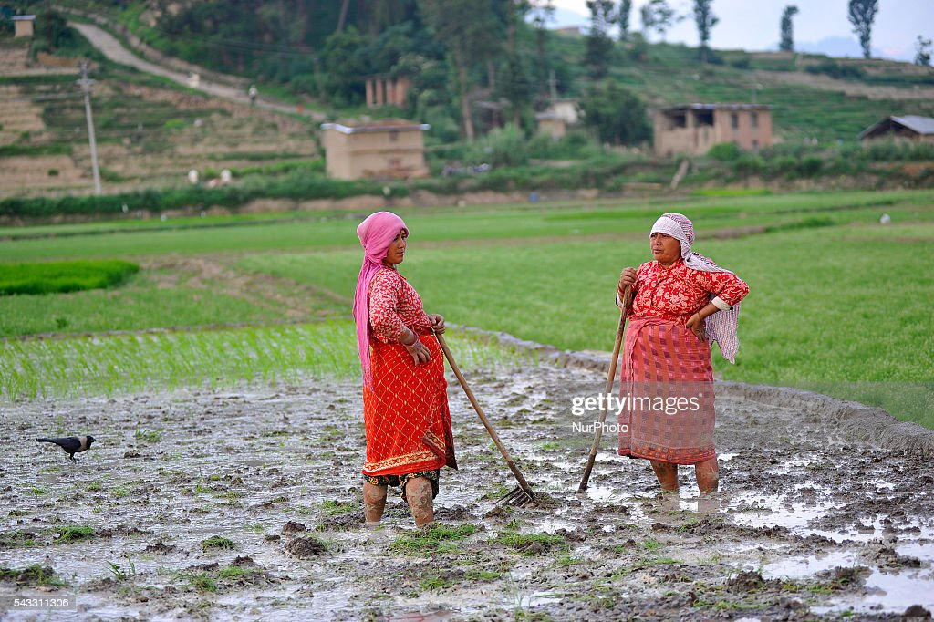 Local farmer's take rest after Plough field for Plants Rice Saplings at Khokana, Patan, Nepal on June 27, 2016. Due to the less rainfall on monsoon season, Most of the people of Khokana Plants Rice by pumping water from nearer Bagmati River, which cost additional of NRs 500 (US$ 5) per hour for pump charge.