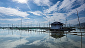 Gorontalo is small town facing the Togean islands. A massive lake has been transformed as fish farms and the people use long bamboos to define their property perimeter.
