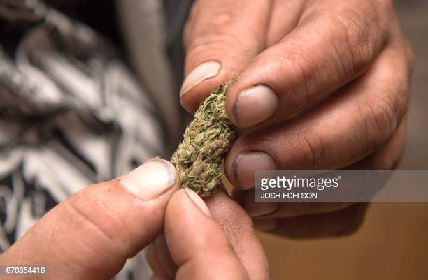 Local grower Adrian Shareve who has accepted payment in the form of pork and other barter items inspects a marijuana nug provided by grower Justin...