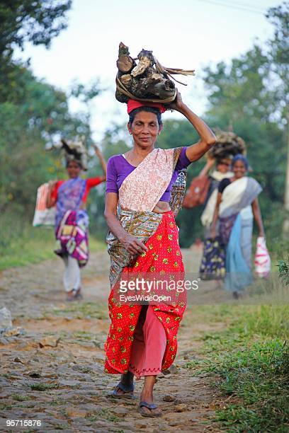 Local indian women are carrying firewood on their heads in Kumily on December 31 2009 in Kumily near Trivandrum Kerala India