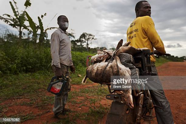 Local people with bushmeat sold and purchased all along the logging roads of Cameroon this is not an illegal activity at this time but as logging...