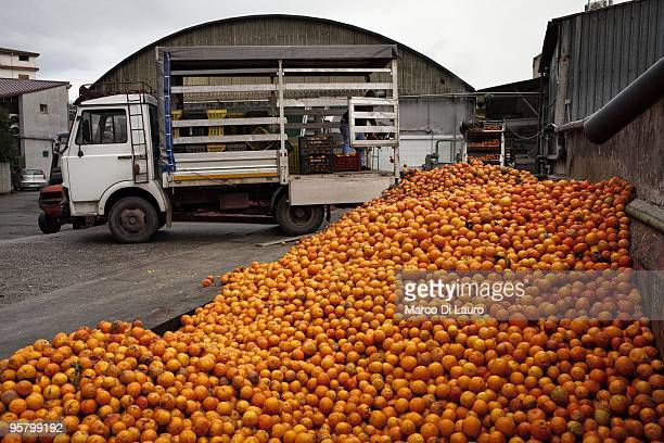 A local resident is seen working in a factory that produce concentrate juice from oranges on January 12 2010 in Rosarno Calabria Southern Italy On...
