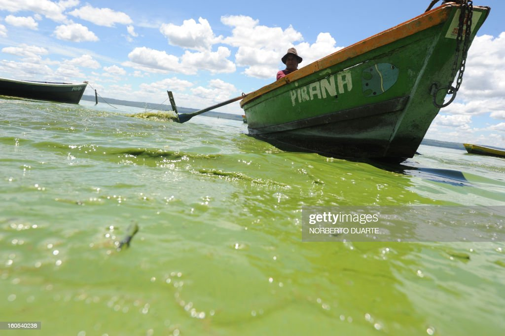 A local resident paddles across the polluted waters of the Ypacarai Lake near Aregua, Paraguay, on February 2, 2013. Five months after the finding of cyanobacteria in its waters, the pollution in the once blue waters of the Ypacarai lake is worse than ever, chasing with its fetid emanations many Aregua residents toward other municipalities. AFP PHOTO/Norberto DUARTE