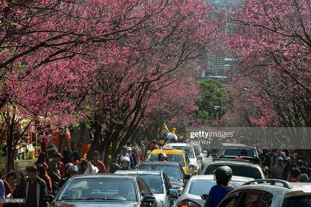 Local residents visit cherry blossom flowers in Peitou district in Taipei on the second day of the lunar new year on February 11, 2013. Chinese lunar new year, celebrated by Chinese communities the world over, falls on February 10 with the beginning of the new moon. AFP PHOTO / Sam Yeh