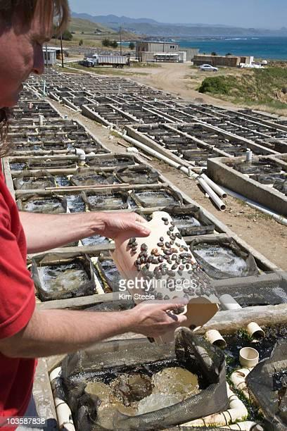 Local sustainable aquaculture