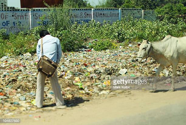 A local urinates on the road side between Delhi and Agra as a cow walks by on September 29 2010 in Agra India